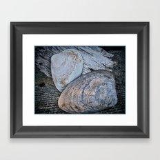 Driftwood and Sea Shells Framed Art Print