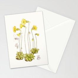 Pinguicula lutea botanical illustration Stationery Cards