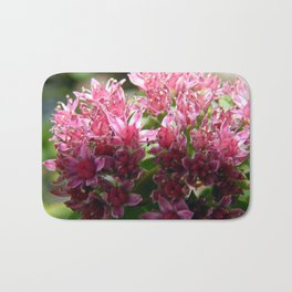Sedum Flowers and the Ant Bath Mat