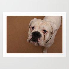 My dog Konstantin Art Print