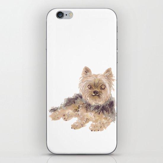 Yorkshire Terrier iPhone & iPod Skin
