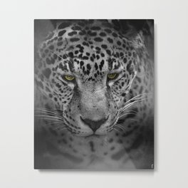An Intense Stare - Wildlife - Leopard Metal Print