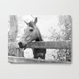 Cheeky Horse Metal Print
