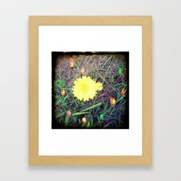 fairy flower lights.... Framed Art Print