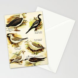 Black browed Albatross Snake Bird Mew Gull Herring Gull Parasitic Jaeger Kittiwake24 Stationery Cards