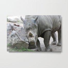 Cuddly Rhino Metal Print
