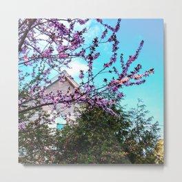 Spring Blooms in Maine (2) Metal Print
