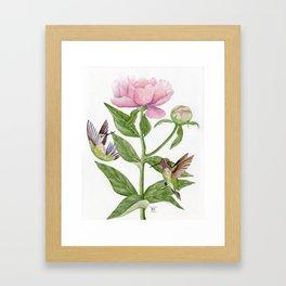 Anna's Hummingbirds & Peonies Framed Art Print