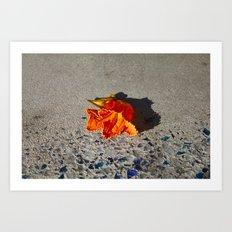 Flower shadow Art Print