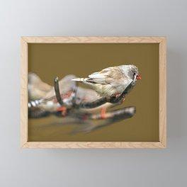 Waxbills Tropical Exotic Little Birds Perching Framed Mini Art Print