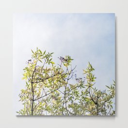 Summer branches Metal Print