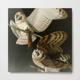 Barn Owl - Vintage Bird Illustration Metal Print