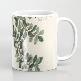 Bearberry (Arbutus uva ursi)  from Medical Botany (1836) by John Stephenson and James Morss Churchil Coffee Mug