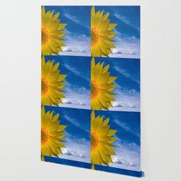 Concept Sunflower Greetingcards Wallpaper