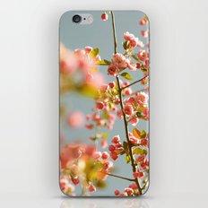 Sherbet Sky iPhone & iPod Skin