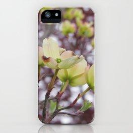yellow dogwood flowers on black maple bokeh iPhone Case