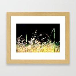 gold&black grass Framed Art Print