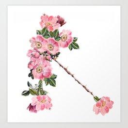 Briar Rose 7B Art Print