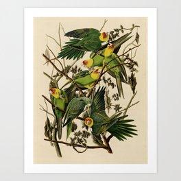 Vintage Parrot Illustration Art Print