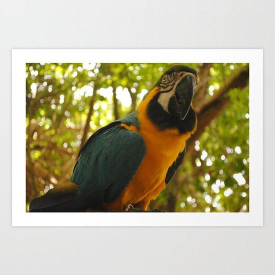 parrot 2 Art Print
