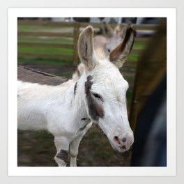donkey2 Art Print