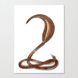 Desert Serpent Canvas Print