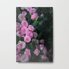 Vintage Pink Roses Metal Print