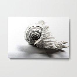 Fan Shell Metal Print