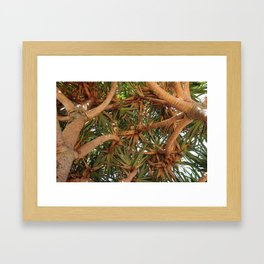 Where the Pandanus Meet Framed Art Print