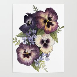 Watercolor Pansy Bouquet Poster