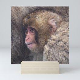 Baby Snow Monkey Mini Art Print