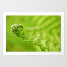 Fern Leaf Curl, Green Nature / Botanical Photograph Art Print