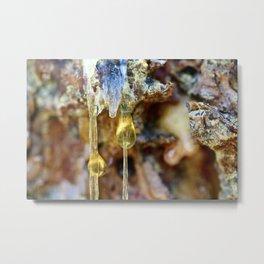 Ponderosa Pine Sap 2 Metal Print