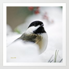 White Winter Chickadee Art Print