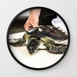 A juvenile green sea turtle is prepared for its release into the waters of the Banana River at NASAs Wall Clock