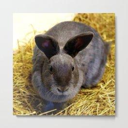 Cute Rabbit 17 Metal Print
