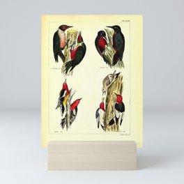 061 picus torquatus picus herminierii Red breasted Sapsucker Red headed Woodpecker4 Mini Art Print