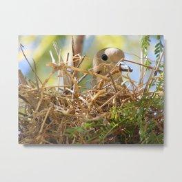 Nest Metal Print