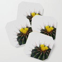 Cactus Flower Coaster