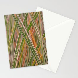 MISCANTHUS GRASS MORNING LIGHT Stationery Cards