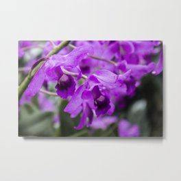 purple flowers • nature photography Metal Print