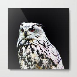 Eurasian Eagle-owl on a black background Metal Print