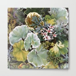 Geraniums Galore Metal Print