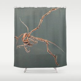 Gryphon Skeleton Anatomy No Labels Shower Curtain