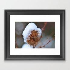 Snowy Burrs Framed Art Print