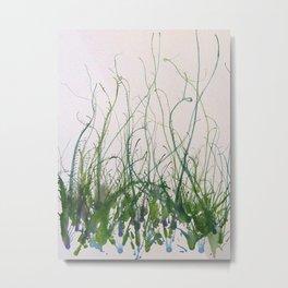 Cornflower Metal Print