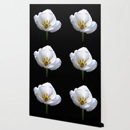 Inside A White Tulip On Black Wallpaper
