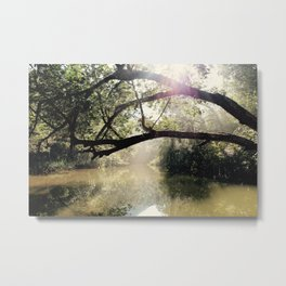 Morning Light Metal Print