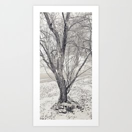 Snowy Trees v2 Art Print