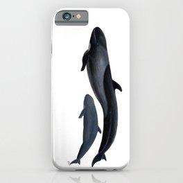 False killer whale iPhone Case